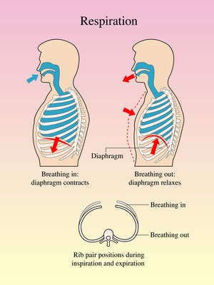 breathe using diaphragm for singing
