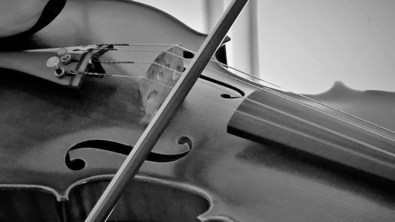 The bridge of the violin