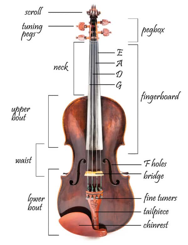 The parts of a violin
