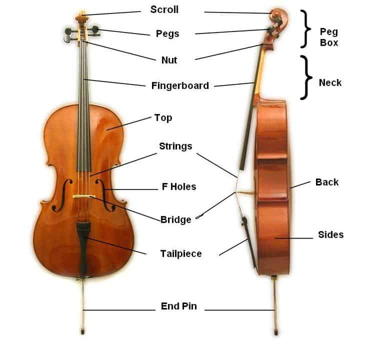 Parts of the cello